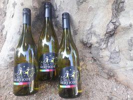 Nieuw: Le Petit Berticot Sauvignon Blanc