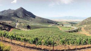 Kloovenburg wijnen Zuid Afrika