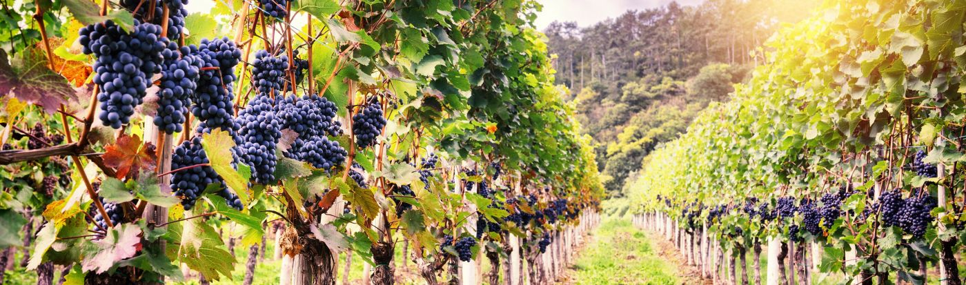 wijnzinnig gendt (4)